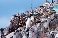 ゴミのなかを歩くペンギン