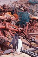ゴミのなかにいるペンギン