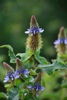 南アフリカの植物