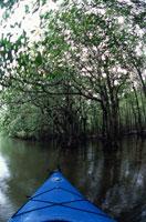 マングローブの林とカヌー