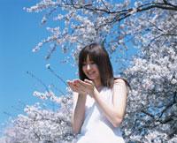 手を眺める日本人女性と桜
