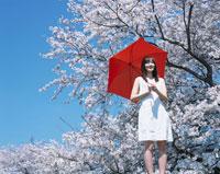 赤い傘を差す日本人女性と桜