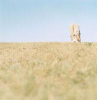 芝生の斜面を登る男の子の下半身 02299002274| 写真素材・ストックフォト・画像・イラスト素材|アマナイメージズ