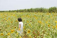 ヒマワリ畑の中の女の子