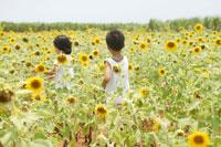 ヒマワリ畑の中の男の子と女の子