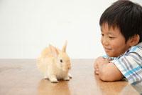 ウサギと男の子