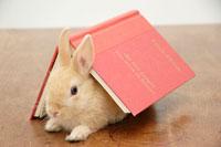 本とウサギ
