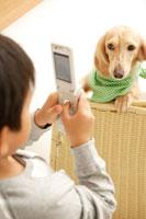 携帯で犬の写真を撮る男の子 02299004605| 写真素材・ストックフォト・画像・イラスト素材|アマナイメージズ