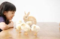 女の子とテーブルの上のウサギとヒヨコ