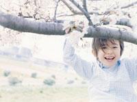 桜の木と男の子