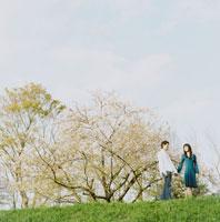 手をつないで歩くカップルと桜