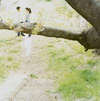 手をつなぐカップルと木