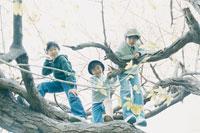 木に登った3人の少年