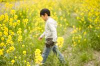菜の花畑を歩く少年