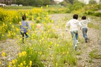 菜の花畑を駆ける少年3人の後姿