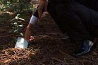 森の中でCDを拾うビジネスマン 02299006005| 写真素材・ストックフォト・画像・イラスト素材|アマナイメージズ