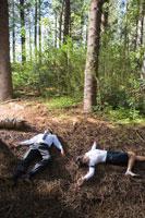 森で倒れるビジネスマンとOL