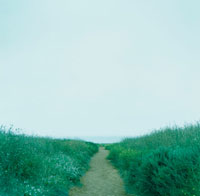 草原の道 02301000123| 写真素材・ストックフォト・画像・イラスト素材|アマナイメージズ