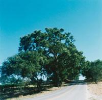 木と道 02301000125| 写真素材・ストックフォト・画像・イラスト素材|アマナイメージズ
