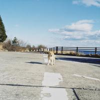 路上の子犬 02302000095| 写真素材・ストックフォト・画像・イラスト素材|アマナイメージズ