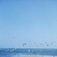 青空を飛ぶカモメの群れ 02302000117  写真素材・ストックフォト・画像・イラスト素材 アマナイメージズ