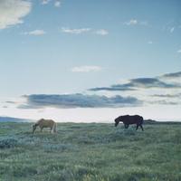 草原を歩く2頭の馬