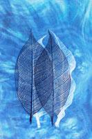 重なる2枚の透ける葉