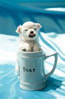 カップに足を入れている子犬