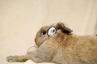 イヤフォンをつけたウサギ