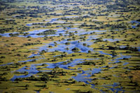 Okavango Delta (aerial)