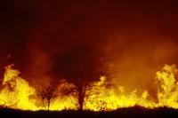 Bushfire, Okavango Delta, Botswana 02314000240| 写真素材・ストックフォト・画像・イラスト素材|アマナイメージズ