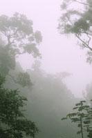 Epiphytes, Serra dos Orgaos Natil Park 02314000278| 写真素材・ストックフォト・画像・イラスト素材|アマナイメージズ