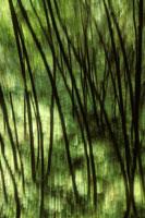 Tree impression 02314000351| 写真素材・ストックフォト・画像・イラスト素材|アマナイメージズ