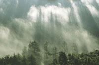 Coastal fog and redwoods 02314000385| 写真素材・ストックフォト・画像・イラスト素材|アマナイメージズ