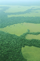 Mixed forest and savannah habitats