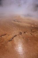 Cyano bacteria at hot spring