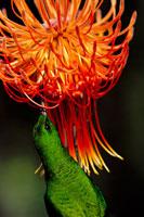 植物を食べるミドリオナガタイヨウチョウ 02314002158| 写真素材・ストックフォト・画像・イラスト素材|アマナイメージズ