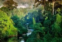 低地雨林を流れる川