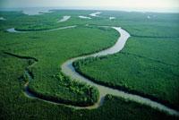 マングローブ林の川の支流