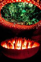 ラフレシアの花の内側 02314002286| 写真素材・ストックフォト・画像・イラスト素材|アマナイメージズ