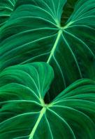 ジャングルの群葉 02314002369| 写真素材・ストックフォト・画像・イラスト素材|アマナイメージズ