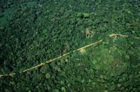 降雨林を抜ける道
