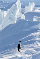 氷の風景の中のコウテイペンギン