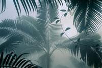 靄の中のパーム椰子