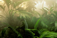 靄の中の降雨林植生