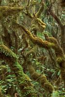 コケの多い雲林