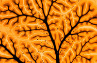 ヒトの脳 02314002832| 写真素材・ストックフォト・画像・イラスト素材|アマナイメージズ