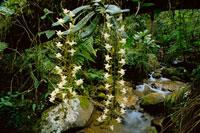 降雨林の蘭