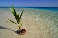 ココナッツと海岸