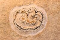 シダの葉痕 02314003561| 写真素材・ストックフォト・画像・イラスト素材|アマナイメージズ